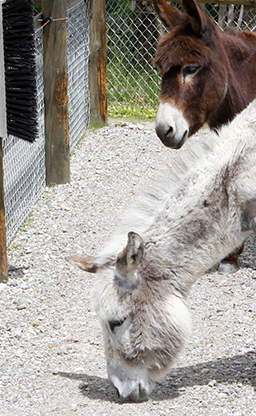 Second image split of a Donkey
